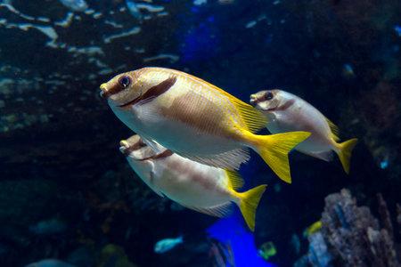 Three tropical sea fish, close up Banco de Imagens