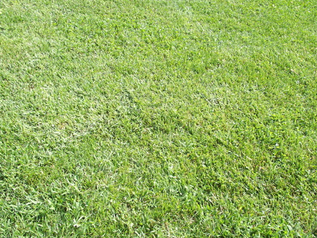 Green cultivated mowed soft lawn