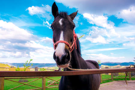 A brown horse with a white spot looking towards the camera in an outdoor stable with a slightly cloudy blue sky. 免版税图像