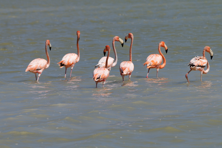 Flamingos on the Mexican lagoon 스톡 콘텐츠