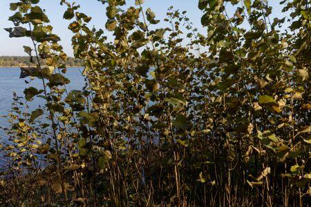 Autumn on a lake 版權商用圖片