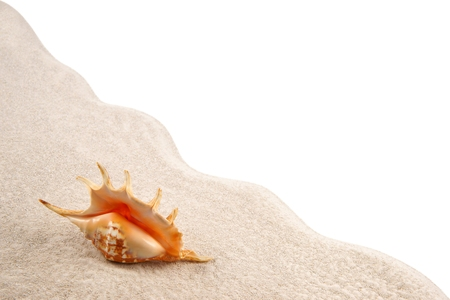 Shell on the sand as background Stock Photo - 23365257