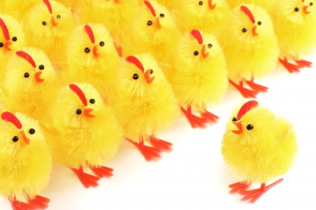 easter chick: Easter chicks, white background Stock Photo