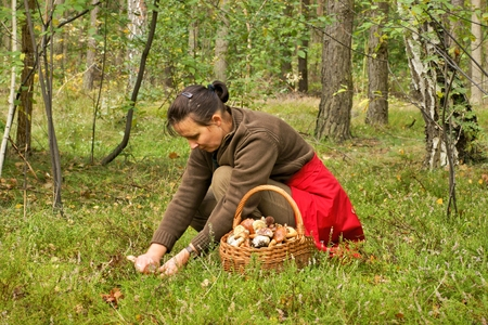 Mushrooming, woman picking mushrooms in the forest photo