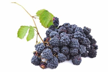 rubus: Blackberry  Rubus fruticosus , Dewberry and Raspberry, fruits on white background