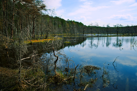 Spring, wetland, pond and forest, landscape