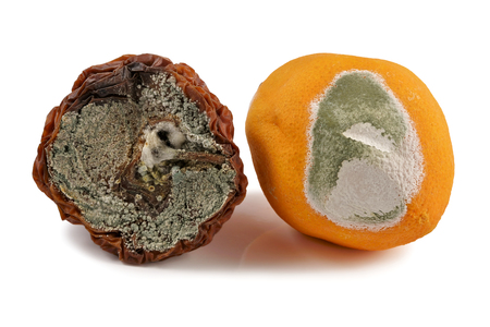 Fruit, apple and orange, moldy, on a white background Фото со стока