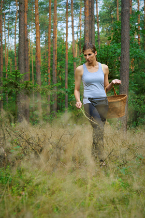 A woman with a wicker basket looking for mushrooms in the forest.