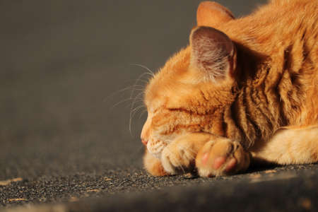 ginger cat sleeping on the roof in the sunshine