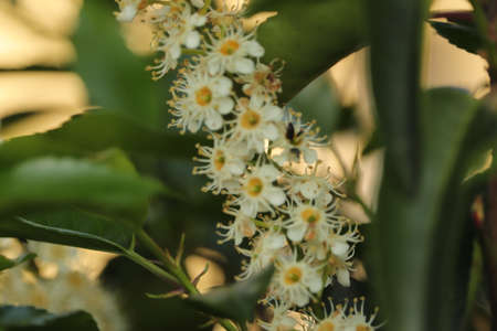 the tiny white flowers on the shrub in the garden seen up close Imagens