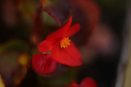 a red flower in the garden in great zoom
