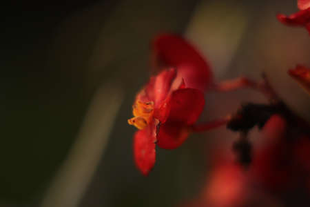 red flower on a gray background as seen in the garden Imagens