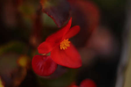 red flower on a dreamlike background in fall
