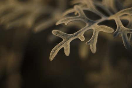 flower twig like snow-capped reindeer horns