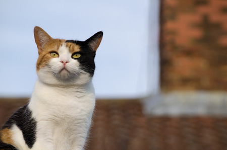 Calico cat on the roof, basking in the sun