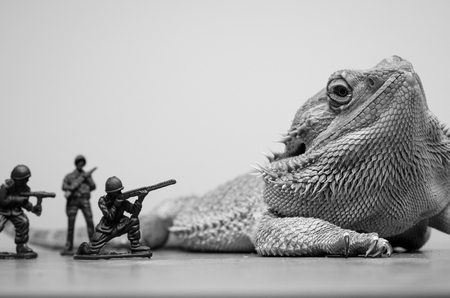 plastic soldier: bearded dragon monster attacked by plastic soldiers