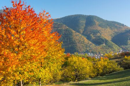 Rural Landscape with Autumn Colors Banco de Imagens