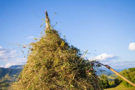 Making hay stack. Rural Scene , Transilvania Romania Foto de archivo