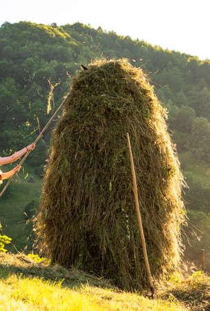 Making hay stack. Rural Scene , Transilvania Romania Banco de Imagens