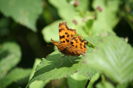orange butterfly on a leaf Stock Photo
