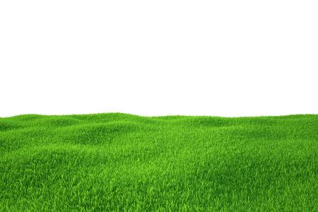 La naturaleza de fondo del campo de hierba verde vacía Grass Field Foto de archivo - 27143409