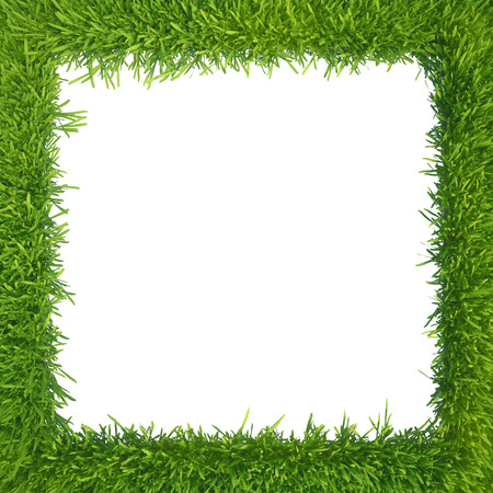 green grass isolated on white background  fresh green grass