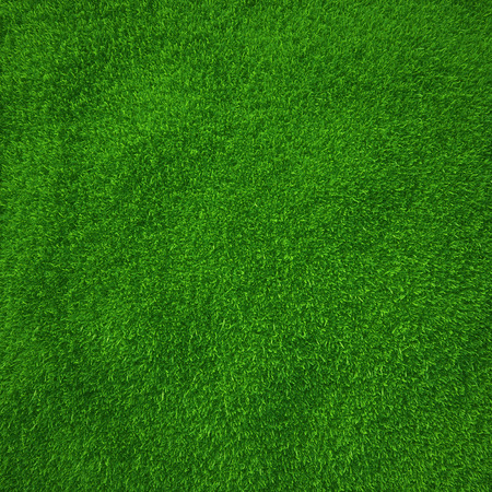 green grass  natural background texture  fresh spring green grass