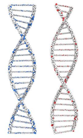 2 つは染色体白に DNA 分子をツイストしました。3 d のレンダリング。 写真素材