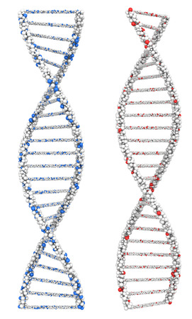 Two twisted DNA molecules into the chromosome white. 3d render.