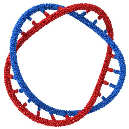chromosome: Chromosome DNA molecules twisted into a spiral.