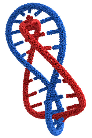 guanine: DNA molecules are twisted into a spiral and connected in a circle. 3d render on a white background