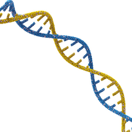 DNA molecules. 3d render on a white background.