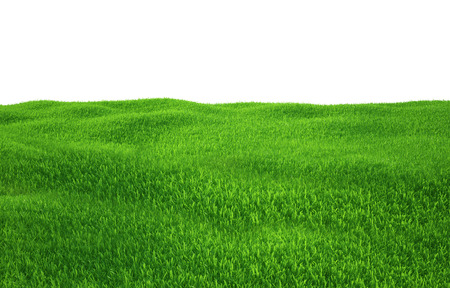 grass field: Green grass growing on hills with white background top view. 3d render