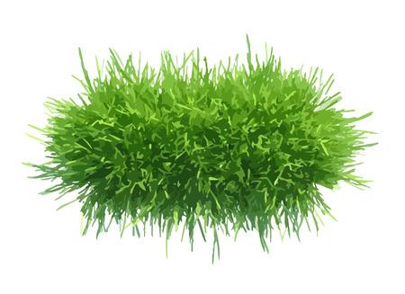 tuft: Vector illustration tuft of grass for the banner.