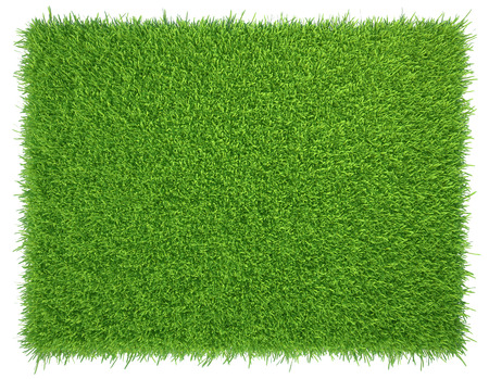 Green grass. natural background texture. fresh spring green grass. 免版税图像