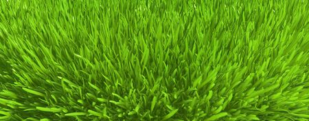 Green grass. background texture. fresh spring green grass. 3d rendering Stock Photo - 125293913