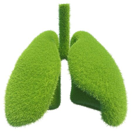 Human lungs in the form of green fresh grass. Symbol of healthy lungs. 3d rendering.