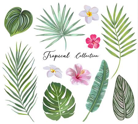 hand getrokken Set van tropische bladeren en bloemen. vector ontwerpconcept