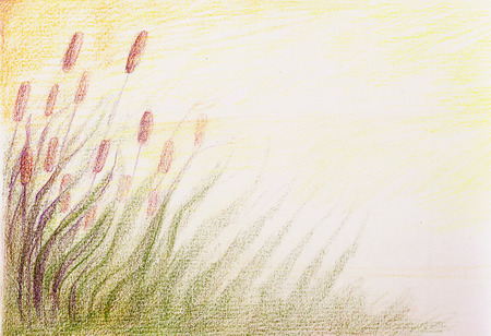scenics: colorful drawind of reeds on abstract spotted background.