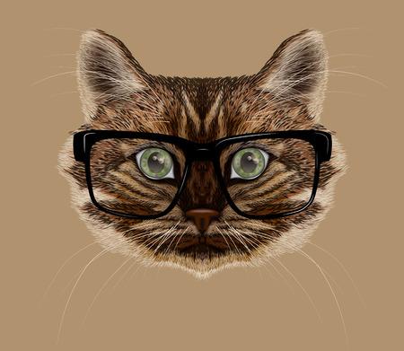 cat's eye glasses: Vector illustration of cat portrait