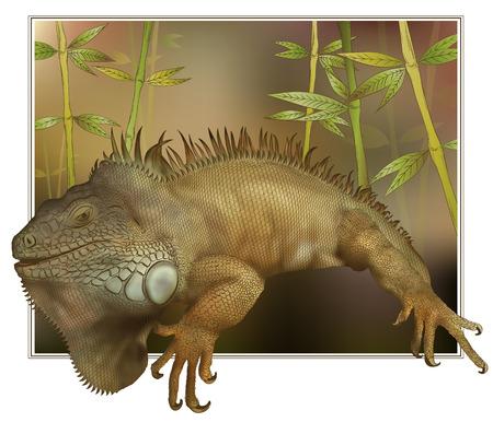 salamandra: Ilustraci�n del vector de la salamandra para salir de una imagen