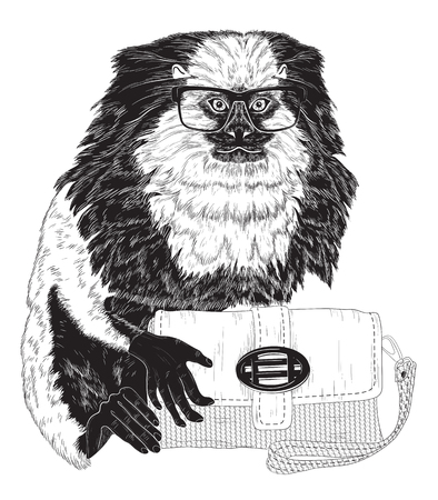 glamorous: Glamorous fashion marmoset in stylish glasses with bag