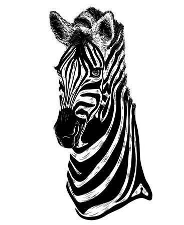 Ilustración del vector del retrato de cebra en un fondo blanco