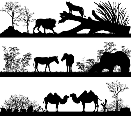 mountain lions: set of illustration with wild animals lion, horse, pony, zebra, camel in different habitats Illustration