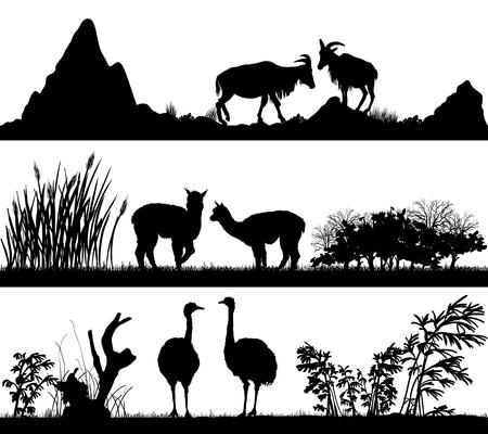 habitats: set of illustration with wild animals goat, alpaca, ostrich in different habitats Illustration