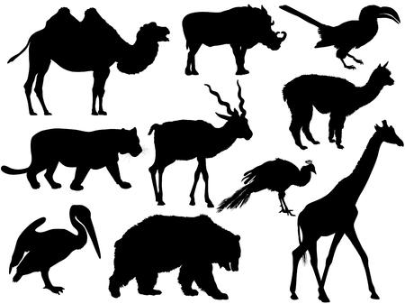 set of wild animal silhouettes camel, wild boar, bird, Parrot, Lion, Tiger, Antelope, alpaca, Lama, Peacock, giraffe, bear, Grizzly, cormorant