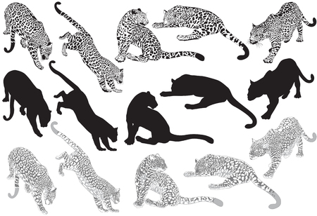 ounce: Set of leopard on a white background Illustration