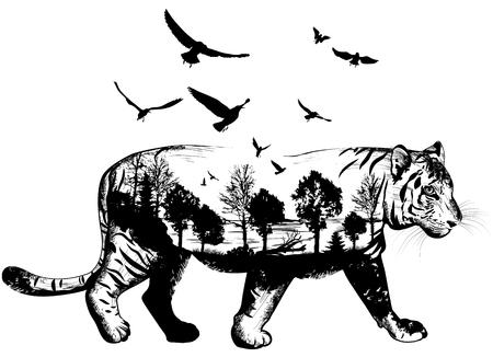 Dibujado a mano del tigre para su diseño, el concepto de la vida silvestre