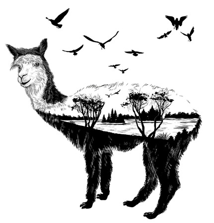 wildlife: alpaca for your design, wildlife concept