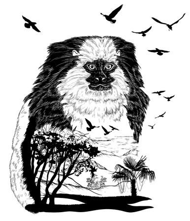 wildlife: Monkey marmoset for your design, wildlife concept